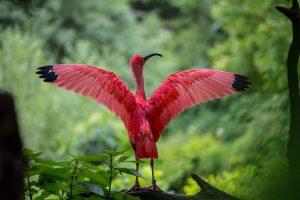 vogel reikt naar vrijheid